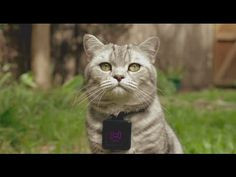 Whiskas Catstacam Lets Your Kitty Take to Instagram - http://www.psfk.com/2015/04/cats-internet-cats-instagram-whiskas-catstacam-whiskas-australia.html
