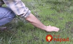 Here's a video and simple how-to instructions showing you how to make grass grow fast and fix bald spots in your lawn. Do THIS to make your yard look so much better—and it only takes 15 minutes! Air Conditioner Screen, Lawn Mower Maintenance, Dog Urine, Bald Spot, Peat Moss, Ornamental Grasses, Front Yard Landscaping, Colorado Landscaping, Landscaping Plants
