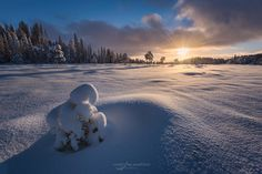 Little tree - Sunlight, Discovery, Travel Photography, Snow, Landscape, Amazing, Winter, Outdoor Decor, Sunday