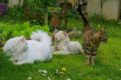 Don't do that. Don't!!!  #cat #cats #cutecats #cutepats #cuteanimals