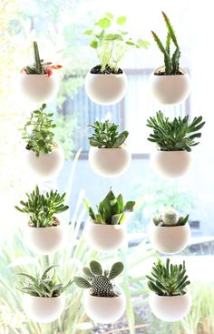 Tiny gardens that attach to your window!