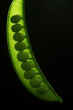 peas | Very cool photo blog