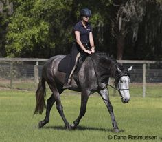 Dressage  Creating stronger partnerships and healthy bio-mechanics by combining the principles of natural horsemanship with the art of dressage.