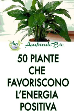 Outdoor Plants, Air Plants, Rosemary Plant, Positive Energie, Green Nature, Green Life, Types Of Plants, Natural Life, Plant Care