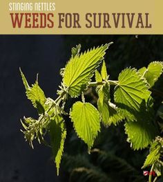 Waste Not Want Not | Using Weeds For Survival #survivallife www.survivallife.com