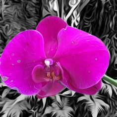 Orchid Love. Get this custom designed modern canvas art at  @luannsmergirls - - - #mermaidart #digitalart #digitalpainting #digitalphotography #floralart - #orchid #flowerart #art #print #canvas