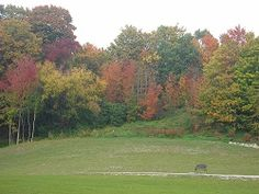 MGVideoClips.com - Mili Goldansky Photography Golf Courses, Canada, Toronto, Plants, Photography, Fall, Autumn, Flora, Plant