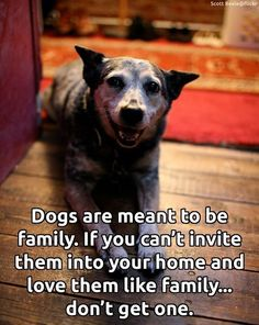 Dogs are meant to be family. If you can't invite them into your home and love them like family...don't get one.