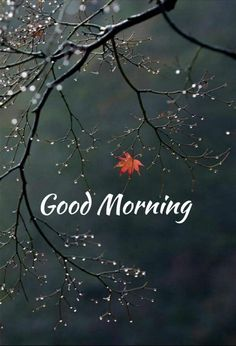 733 Best Good Morning Flowers Images In 2019 Good Morning