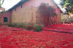 Penélope | iGNANT.de The installation of artist Tatiana pale deals with the myth of Homer's Odyssey.The installation is located in the chapel of Morumbin in Sao Paulo. Pale lives and works in Brazil.The Red yarn is through holes in the wall to run outside where it covers the whole garden