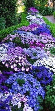 Perennials 10 low-maintenance perennials for the busy gardener! You can still have beautiful flower beds without spending a lot of time maintaining low-maintenance perennials for the busy gardener! You can still have beautiful flower beds without s Beautiful Flowers Garden, Beautiful Gardens, House Beautiful, Beautiful Gorgeous, Flowers In Garden, Flower Bed Plants, Small Flower Gardens, Flower Garden Plans, Very Beautiful Flowers