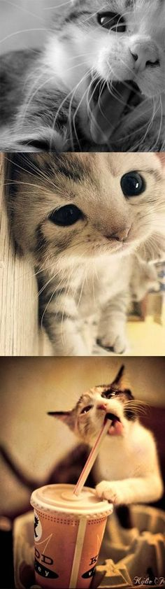 I Cant Even Handle The Cuteness.