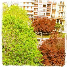"""#Primavera en la Plazuela San Miguel #Gijon    """"En las lluvias de primavera todas las cosas son más bellas"""". - Kaga No Chiyo"""