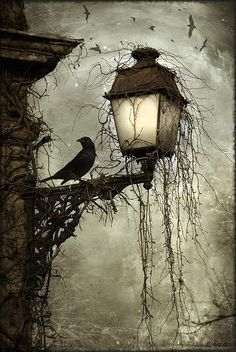 Raven at Dusk  - would love to recreate this for Halloween decor.