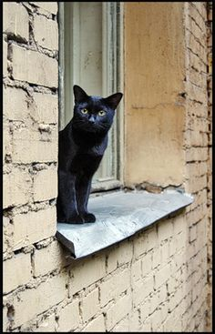black cat on window ledge