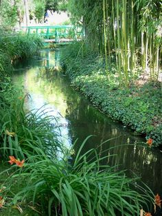 Giverny: Jardin de Monet : Jardin d'Eau : cours d'eau (Ru), fleurs de lys orangés, bambous, et petit pont vert en arrière-plan - France-Voyage.com