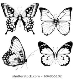 Vector butterfly hand drawn set sketch style on white background. Papillon Butterfly, Butterfly Sketch, Butterfly Outline, Butterfly Images, Butterfly Tattoo Designs, Butterfly Hand Tattoo, Blue Butterfly, Outline Drawings, Art Drawings Sketches