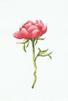Peony / Peonia. Watercolor by Isabel Mariasg.
