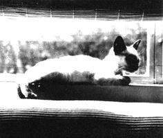 Dean's cat, Marcus, a gift from Elizabeth Taylor. The night before his fateful crash, Jimmy gave the cat to a girlfriend to watch while he was away racing Jimmy Dean, The Night Before, Cat People, Siamese Cats, Rare Photos, Hollywood Stars, Cat Lady, Cute Cats, Creatures