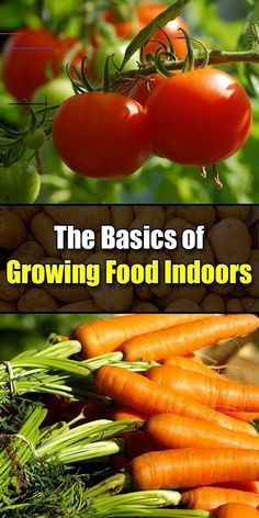 Are you aware you can grow various herbs and vegetables indoors all year round? Only one tall shelving unit supplies enough space to create a continuous harvest of delightful fresh options… Indoor Vegetable Gardening, Hydroponic Gardening, Hydroponics, Organic Gardening, Container Gardening, Indoor Farming, Permaculture Garden, Vegetable Farming, Greenhouse Gardening