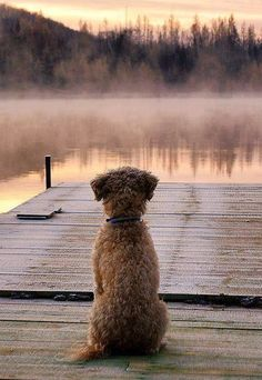 This dog is watching the mist rise from the lake - maybe a swim isn't a good idea.