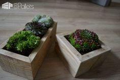 Small Succulents Planters / Petite Décorations De Table Pallet Home Accessories