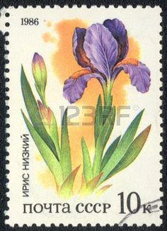 USSR - CIRCA 1986: A stamp printed in USSR  shows  a Iris humilis, series, circa 1986