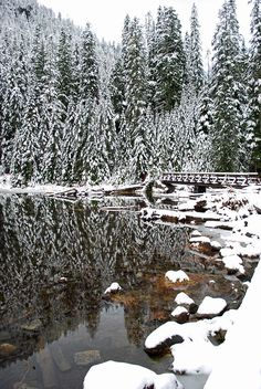 Snowy pines along Lake 22 atop Mount Pilchuck in the Snohomish National Forest, Washington. Beautiful World, Beautiful Places, Seattle, Winter Scenery, Winter Pictures, Winter Beauty, Adventure Is Out There, Pretty Pictures, Beautiful Landscapes