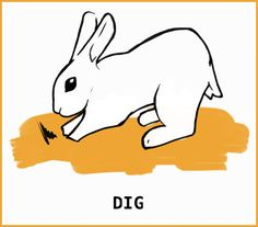 What is that silly rabbit trying to tell me? With an illustrated guide to help you learn about your silly bunny. Rabbit Run, Silly Rabbit, Pet Rabbit, Pet Bunny Rabbits, Bunnies, Rabbit Facts, Rabbit Behavior, Female Rabbit, Guinea Pig Care