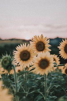 Sunflower Iphone Wallpaper, Nature Iphone Wallpaper, Laptop Wallpaper, Of Wallpaper, Aesthetic Iphone Wallpaper, Wallpaper Backgrounds, Wallpaper Quotes, Cute Backgrounds, Aesthetic Backgrounds