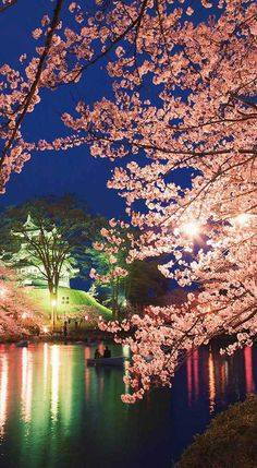 Tokyo's Cherry Blossom Festival #tokyo #travel #festival #holiday #blossom I'm going to a graveyard in Tokyo to see the flowers. Yes, that does sound completely weird. Fortunately, I have a perfectly good explanation. You see, I'm going for the cherry blossom viewing.