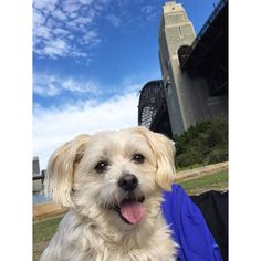 Lucy enjoying her day out in the city  by lizzie.rivera http://www.australiaunwrapped.com/ #AustraliaUnwrapped