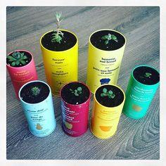 Myriam used empty DAVIDsTEA tins to use as succulent pots! via @m.yri.am