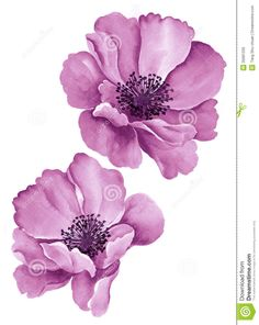 Watercolor illustration flowers in simple background.