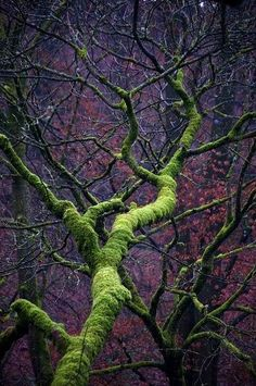 Here is the Moste Magical Tree ever twisting up spookily into the vivid purple woods in the Lake . Relax with these backyard landscaping ideas and landscape design. Foto Nature, All Nature, Amazing Nature, Science Nature, Mother Earth, Mother Nature, Magical Tree, Tree Forest, Forest Light
