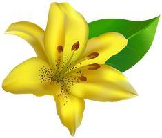 Yellow Lilium Transparent PNG Clip Art Image
