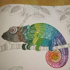 chameleon. #milliemarotta #animalkingdom #chameleon