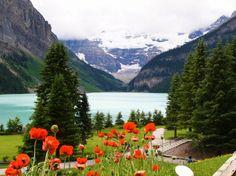 Flowers at Lake Louise - Desktop Nexus Wallpapers