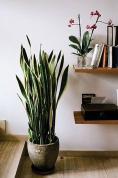 Sometimes you just can't expose your plants to enough sunlight, like if you live in an apartment and you don't have a backyard. But that's not a problem, because there are some beautiful plants that grow in the shade, so you can plant them in your apartment or any shady spot of your backyard. #tallindoorhouseplants