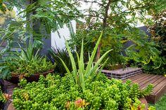 green entry garden with platform steps Landscape Design, Garden Design, Perth Western Australia, Front Yard Landscaping, Garden Beds, Outdoor Spaces, Outdoor Gardens, Courtyards, Tropical Gardens