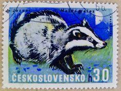 Badger, Czechoslovakia