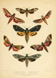 3 - Illustrations of typical specimens of Lepidoptera Heterocera in the collection of the British Museum. - Biodiversity Heritage Library