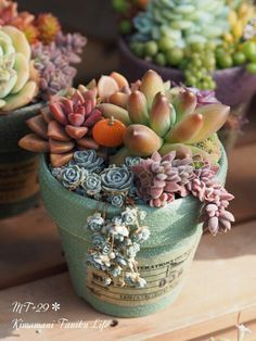 Tiny Succulents Grow As Adorable RabbitShaped Plants In Japan - Japan is going mad over these tiny succulents that look like bunny ears