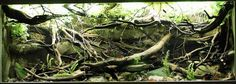 Rommer Talens has created a South American river biotope with the aim, as with many biotope aquaria,. Tropical Freshwater Fish, Freshwater Aquarium Fish, Tropical Fish, Nature Aquarium, Planted Aquarium, Aquascaping, Biotope Aquarium, Fish Tank Design, Aquarium Design