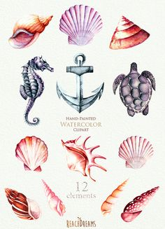 Nautical watercolor clipart. Seashells, Seahorse, Sea turtle, Anchor. Ocean…