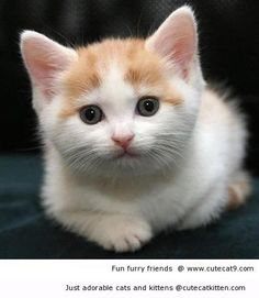 See what has gotten the attention of this kitten | Cute Cat Kitten