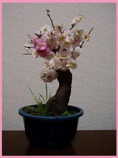 Plum Bonsai