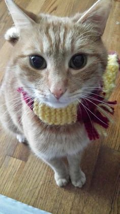After you all liked Toby in his button up I though you might enjoy seeming him in his Harry Potter scarf. One cat for gryffindor. by h4ppy60lucky cats kitten catsonweb cute adorable funny sleepy animals nature kitty cutie ca