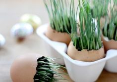 If growing your own Easter grass strikes you as a harebrained idea, well maybe it is.