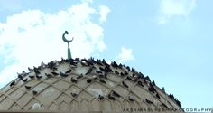Birds on the Mosque :)